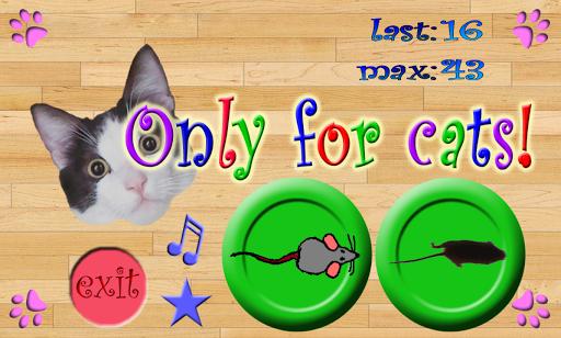 玩休閒App|只有貓免費|APP試玩