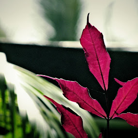 Reddish by Shamsad Mhd - Nature Up Close Leaves & Grasses (  )