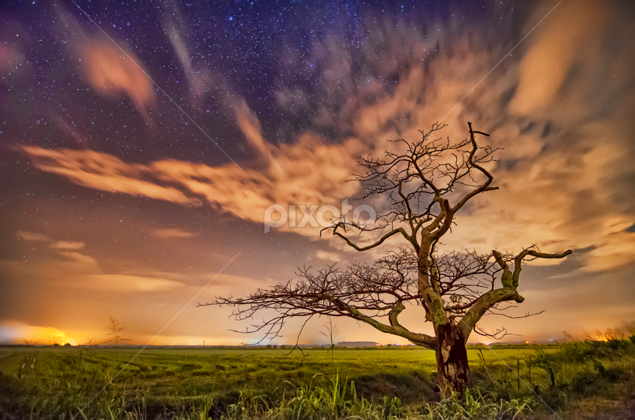 Still and Moving by KIN WAH WONG - Landscapes Cloud Formations ( alone tree, clouds, still and moving, stars, old tree, twilight, paddy fields, scenery, moving clouds, morning, landscapes, dead tree )