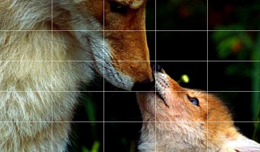 免費下載娛樂APP|Coyote Sound Board app開箱文|APP開箱王