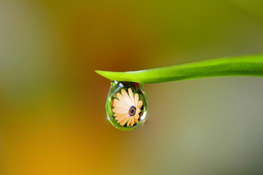 <3 by Talal Berkdar - Nature Up Close Natural Waterdrops