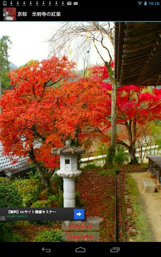 京都 光明寺の紅葉 JP070