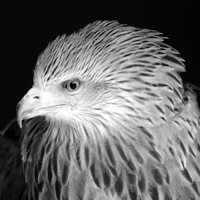 Close to the Eye by Michael Smith - Black & White Animals