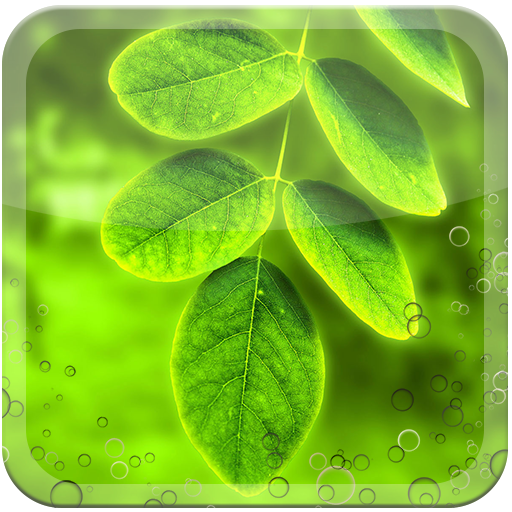 Green Leaf Live Wallpaper LOGO-APP點子