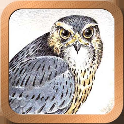 Druid Oracle Cards 娛樂 App LOGO-硬是要APP