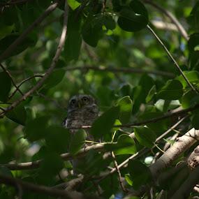 Owl by Palak Patel - Uncategorized All Uncategorized ( bird, tree,  )