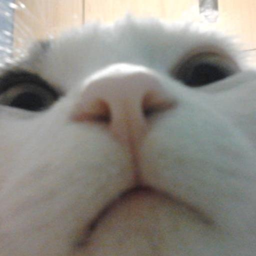 娱乐のwhatsappのための猫 LOGO-記事Game