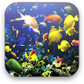 Aquarium Free Video Wallpaper