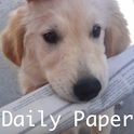 Daily Paper logo