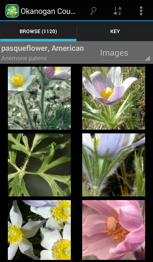 2450 Utah Wildflowers- screenshot