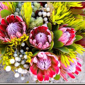 by Philip Kruger - Flowers Flower Arangements (  )