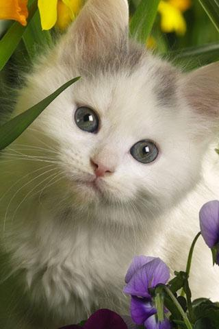 Cute Cat Live Wallpaper - screenshot
