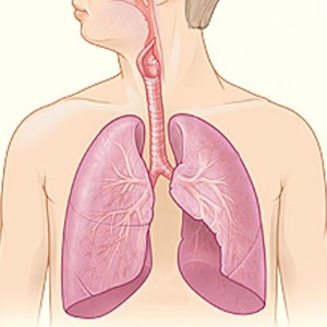 Respiratory System 醫療 App LOGO-硬是要APP