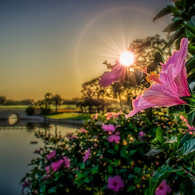Mission Howey by Chris Thomas - Flowers Tree Blossoms ( golf course, sunset, pink, landscape, flower,  )