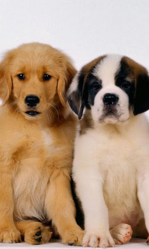 Lovely Dogs Wallpapers