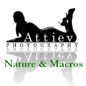 Attiev Nature and Macros