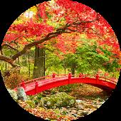 Colors of Autumn Wallpaper
