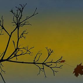 by Nat Bolfan-Stosic - Nature Up Close Leaves & Grasses ( tiny, last )