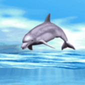 Dolphin Playing Live Wallpaper
