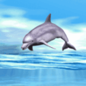 download Dolphin Playing Live Wallpaper apk