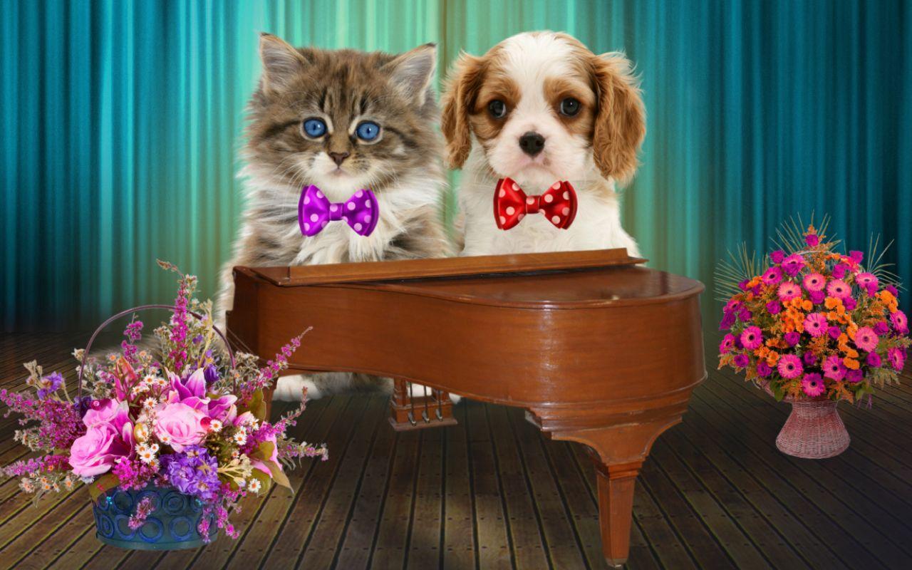 Berbicara Kucing Dan Anjing Apl Android Di Google Play