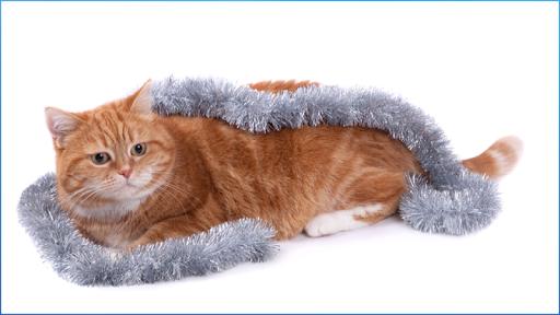 玩娛樂App|Stunning Cats Images免費|APP試玩