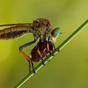 Breakfast time by Fadel Satriawan - Animals Insects & Spiders