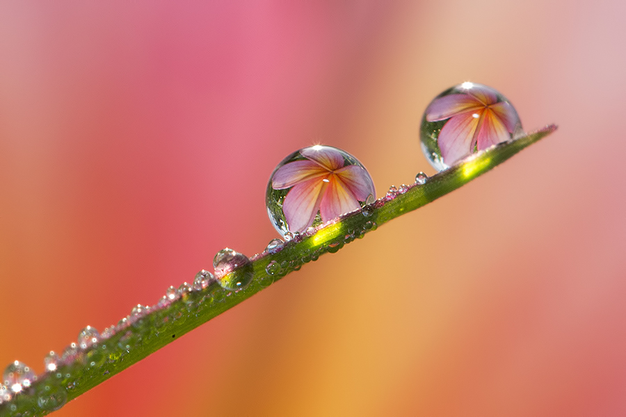 Cacth me if you can by Citra Hernadi - Nature Up Close Natural Waterdrops