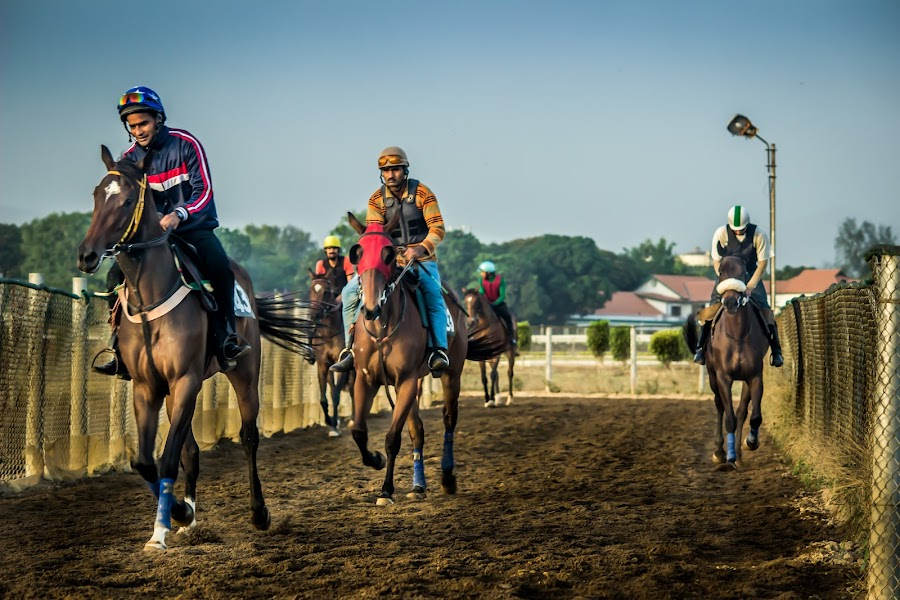 The Races by Neel Gengje - Sports & Fitness Other Sports ( rush, jockey, horse, track, horse racing, whip )