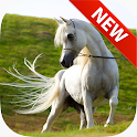 Arabian Horse Wallpapers icon