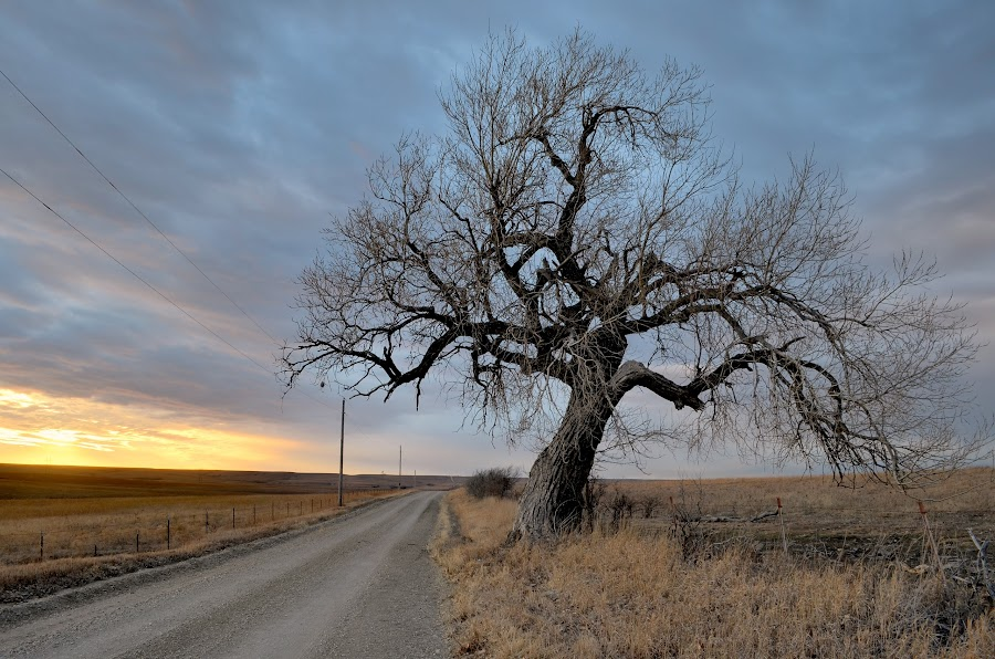 Gnarly Blue Sunset by Adam C Johnson - Landscapes Prairies, Meadows & Fields