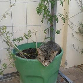 Charleys new sleeping place by Debra Newnham - Animals - Cats Kittens