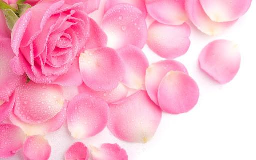 玩個人化App 浪漫玫瑰免費 APP試玩