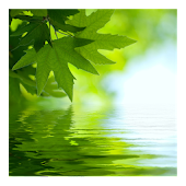 Leaves On Water