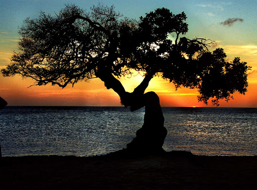 sunset-tree-Aruba - The sun sets behind an iconic windswept tree on the beach of Aruba.