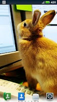 Screenshot of Studious Pets Live Wallpaper