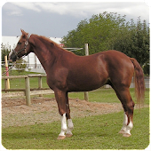 Horse Sounds