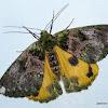 Geometridae, Geometrinae, Pseudoterpnini