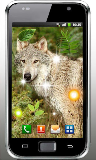 Wild Wolves live wallpaper