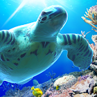 Sea Turtle LiveWallpaper Trial icon
