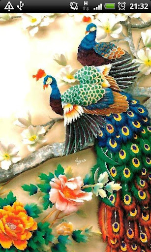 ColorFul Peacock LiveWallpaper