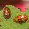 Two leaf beetles