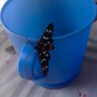 Nine-spotted moth