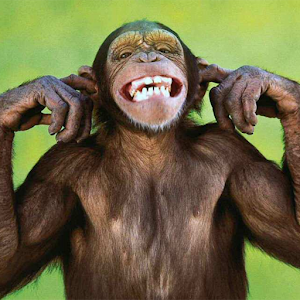 Talking Funny Monkey Free LWP for PC and MAC