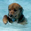 Dog Swim Live Wallpaper icon