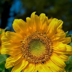 Bunga Yang Indah by Azman Kamaruddin - Flowers Flowers in the Wild