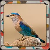 Fun Learn - Birds
