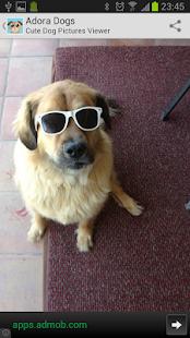 Cute Dog Pictures - Adora Dogs screenshot
