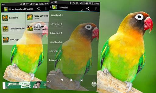 Kicau Burung Lovebird Master