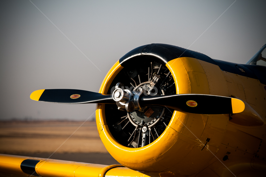 Plane Prop by Werner Booysen - Transportation Airplanes ( colour, world war ii, aviation, plane, wwii, south africa, prop, old plane, military, werner booysen, , aircraft, helicoptors )